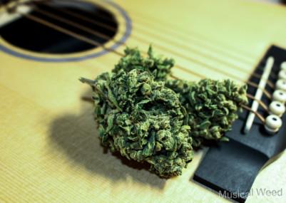 musicweed