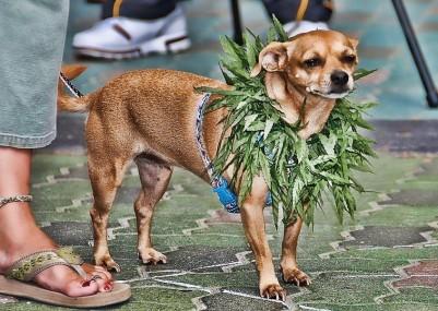 stoner-pet-dog-1024x601